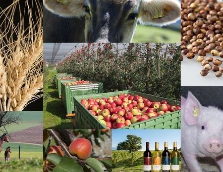 Agricoltura e Animali